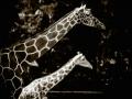 zoo (11 von 13)