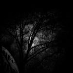 Baum mit Mond im Hintergrund