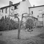 Mein Garten, der mal üppig  voller Obstbäume war. Nun tristet er ein trauriges Darsein.